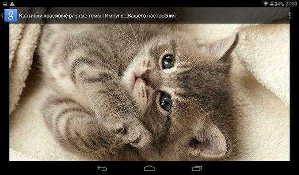 Обои На Экран С Котиками