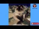 Смешное Видео про животных и людей смешно до слез