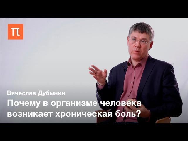 Таламус и гипоталамус Вячеслав Дубынин