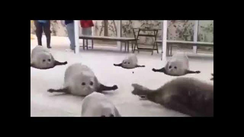 Прыгающие тюлени прикол психоделика