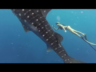 Ocean Ramsey and a Whale Shark