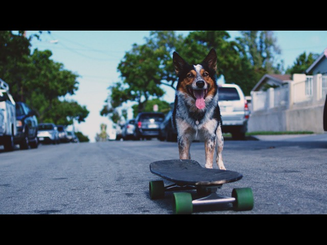 CHON Waterslide Official Music Video