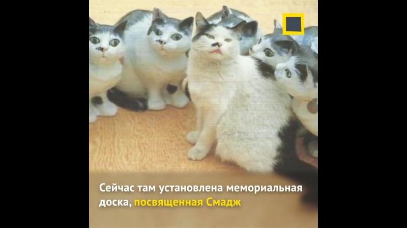 Возможно эти кошки знают об искусстве больше чем мы