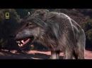 Доисторические хищники Древний Страшный Волк
