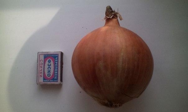У кого-нибудь был опыт выращивания картофеля из семян?