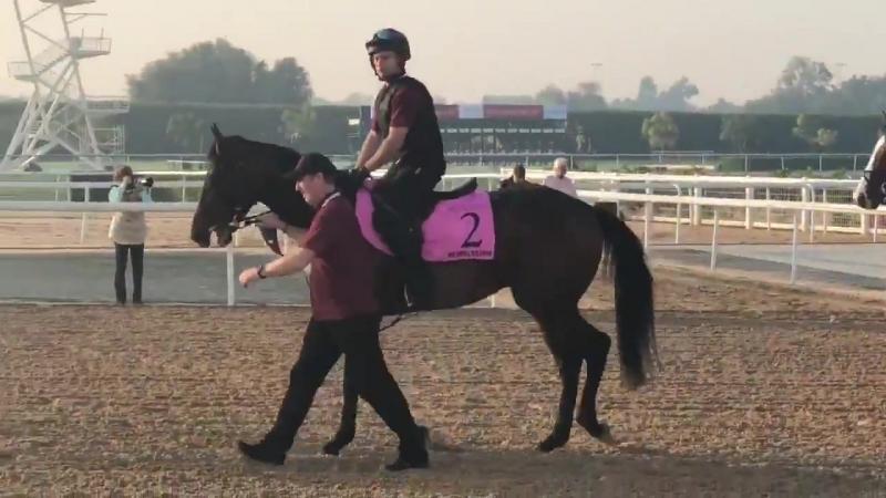 UAE Derby runner and potential @KentuckyDerby candidate Mendelssohn.