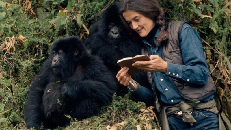 Дайан Фосси Секреты в тумане 1 серия Защитница горилл 2017