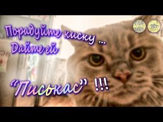Вас интересуют смешные коты ? Приколы с котами ? А всё потому , что ваш кот грустит ... Вы просто не знаете , чем кормить кота .