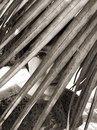 Ира Гребенщикова фотография #30