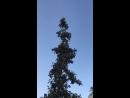 Гадостное ядовитое дерево с шипами
