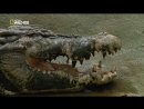 Охота на гигантского крокодила