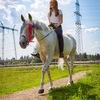 Верховая езда от 4000 руб/месяц Солнечногорск!
