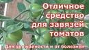 Отличное средство для завязей томатов От болезней и для урожайности