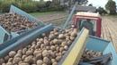 Трактор Т-25 в сцепке с комбайном Anna Z-644 копает картофель на приусадебном участке