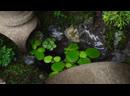 Making a japanese garden