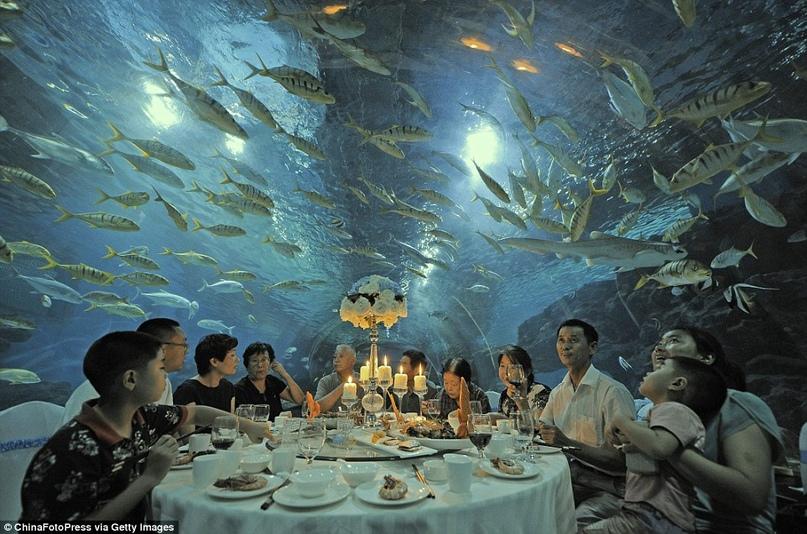 Отель Poseidon Undersea Resort, изображение №2