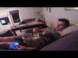 Кот не даёт играть