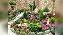 Альпийский сад. Альпинарий в ландшафтном дизайне садового участка