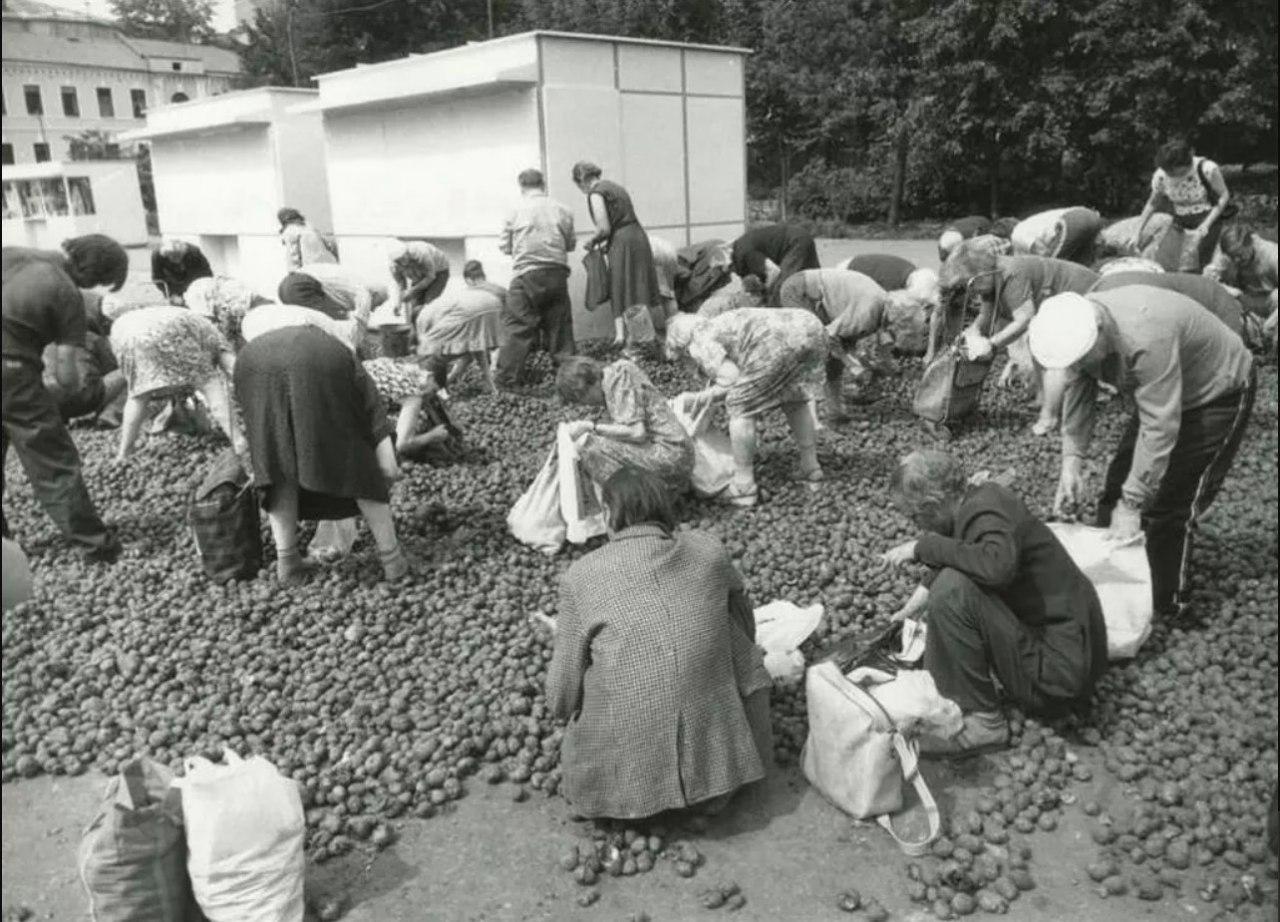 Бесплатная гнилая картошка, Москва, 1993 год.