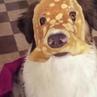 The new avenger: The Pancake Dog™ · coub, коуб