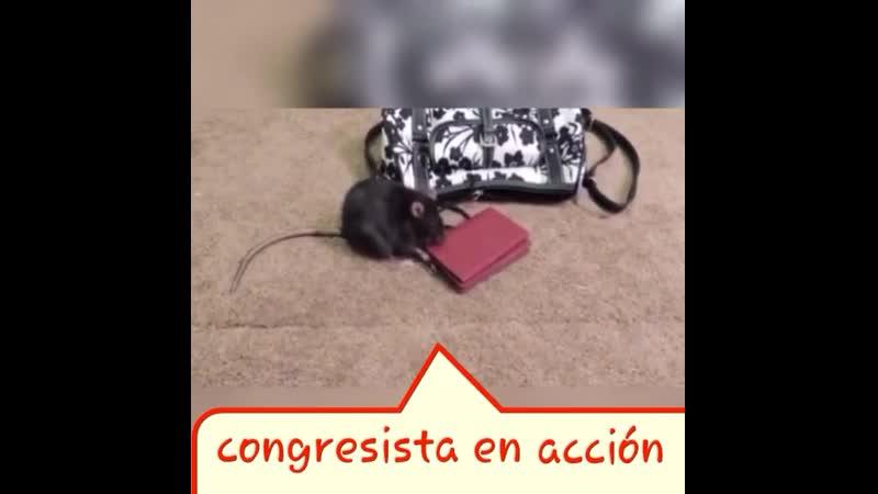 VIDEO-2019-09-28-15-01-16.mp4