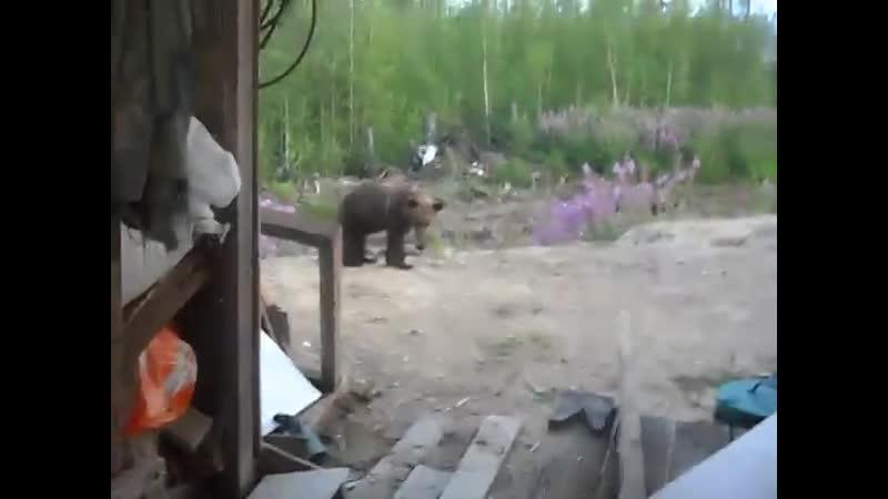 Медведица с медвежатами это не шутки vtldtlbwf c vtldt fnfvb 'nj yt ienrb