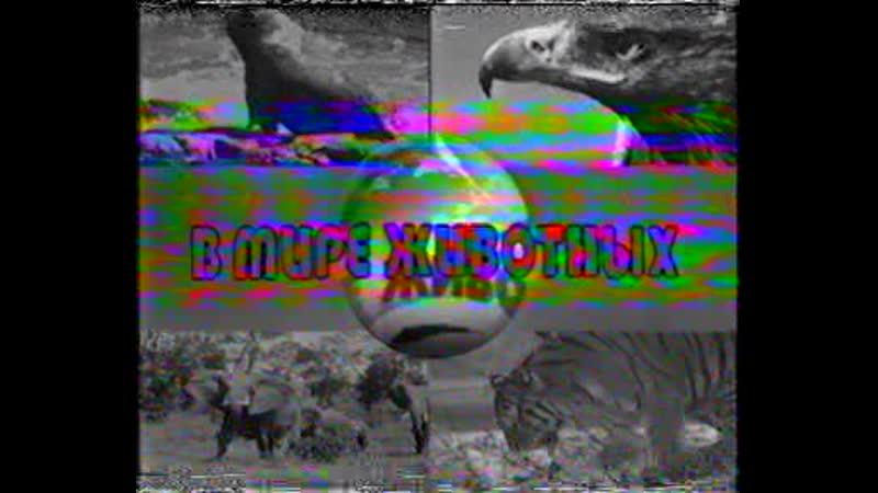 Мои первые видеозаписи Сборки Заповедники дикой природы В мире животных