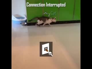 Connection interrupted.