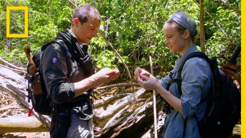 Brie Larson Eats a Rhino Beetle | Running Wild With Bear Grylls