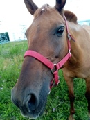 Стеша очень добрая и фотогеничная особа😊 #молодая_лошадь #лошадь_с_душой #конный_двор_Хутор