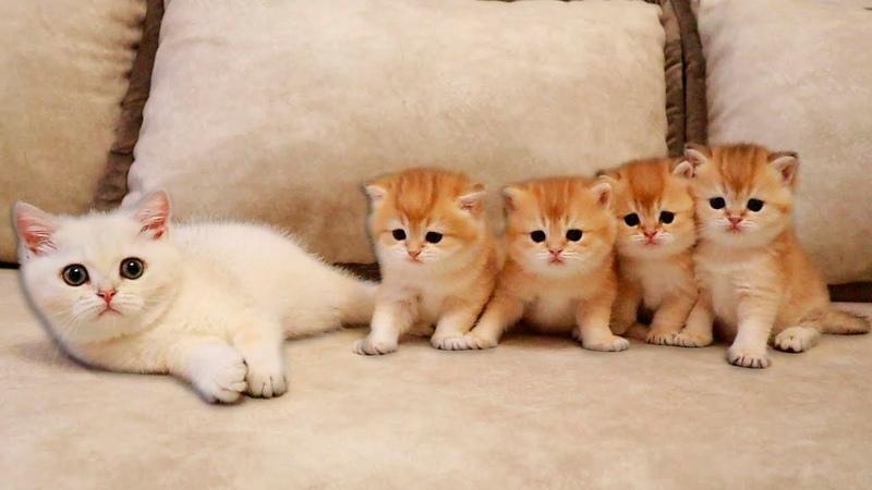 Kitten Coco MET her four Brothers