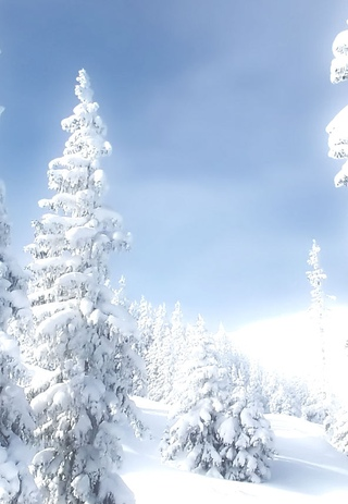Обои На Телефон Зима Скачать Бесплатно Вертикальные