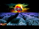 Body Cell Regeneration In A Dream 528 Hz Self-healing and restful sleep