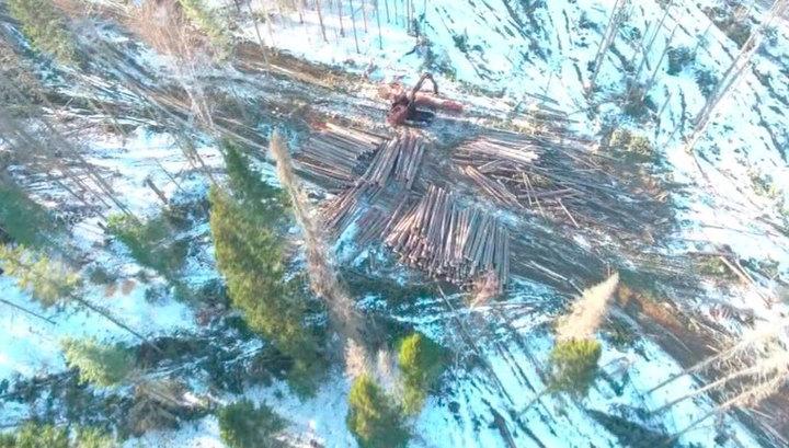 Вести Ru Незаконная вырубка с губителями лесов будет бороться государство