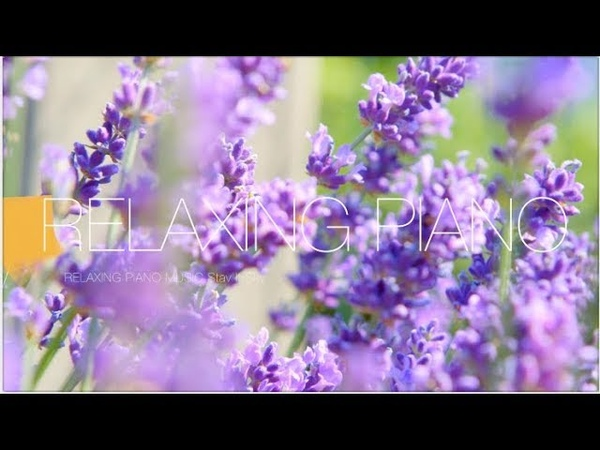 Relaxing Piano Music Study Piano Music Piano For Stress Relief Soft Music For Studing