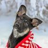 ◤ Приют для бездомных собак ПИФ - Донецк ◢