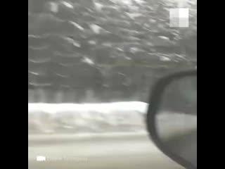 Лоси выбегают на дорогу в Арзамасском районе за солью