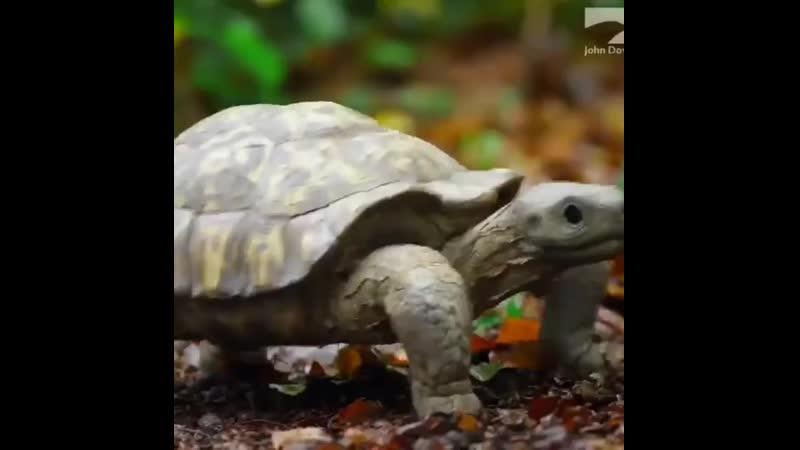 черепаха и обезьяны 😀Когда не уверенны что придешь🐒😂😂