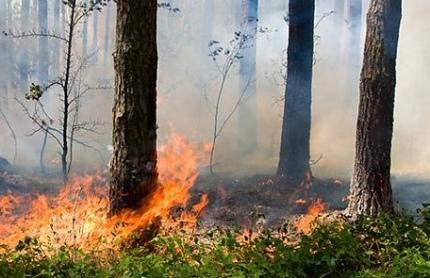 В лесах Марий Эл высокая пожароопасность