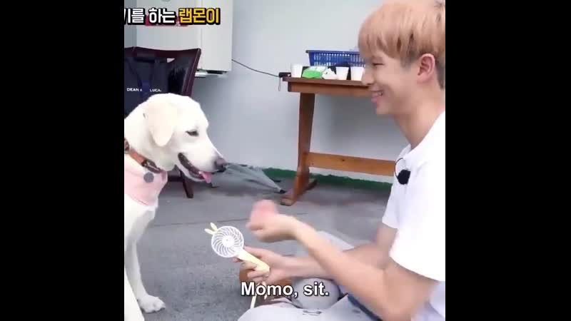 You are not having a bad day, you just haven't seen Namjoon taking care and playing with momo while holding the fan for her