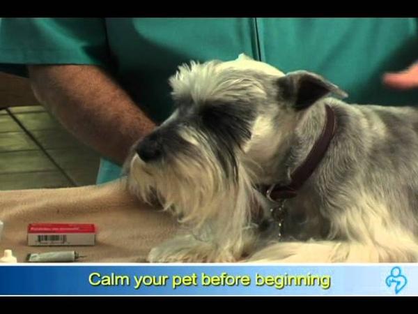 Как применять глазные капли для собак How to administer eye drops to your dog