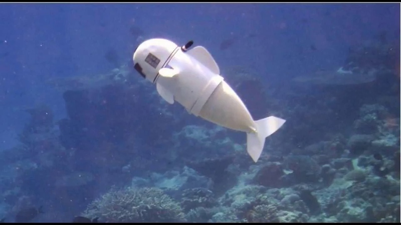 SoFi the robot that swims like a fish MIT's Computer Science and AI Laboratory