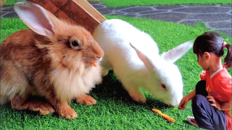 Bermain bersama kelinci dan Kasih makan KELINCI LUCU RABBIT FOREST