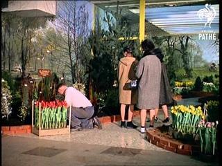 Tulips & Indoor Garden  (1963)