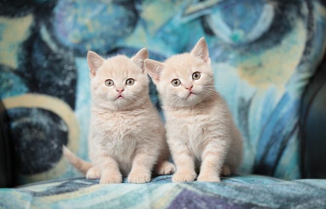 Картинки с котятами хорошего дня