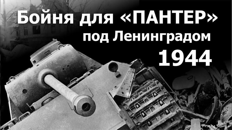 Бойня для Пантер под Ленинградом. 1944 г.