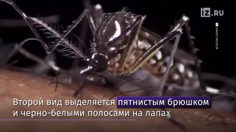 Юг России атакуют опасные комары