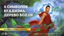 8 символов буддизма Дерево Бодхи