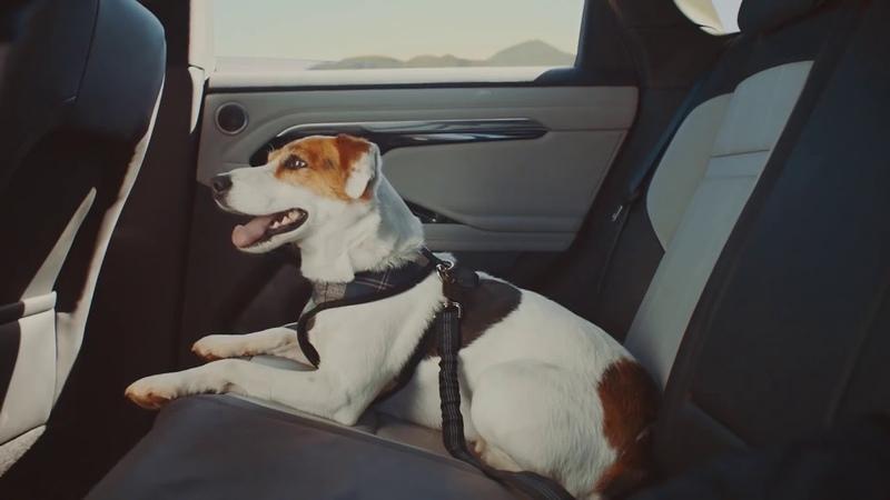 Реклама Range Rover Evoque 2019 Мечта собаки