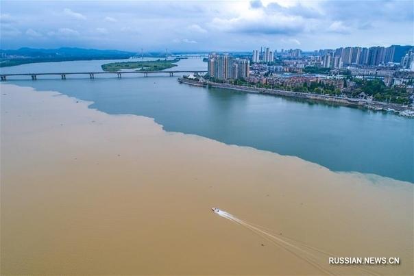 Наполовину чистая, наполовину мутная река Ханьцзян. Под воздействием сильных дождей русло реки Ханьцзян в городе Сянъян (провинция Хубэй, Центральный Китай) разделилось на две контрастно
